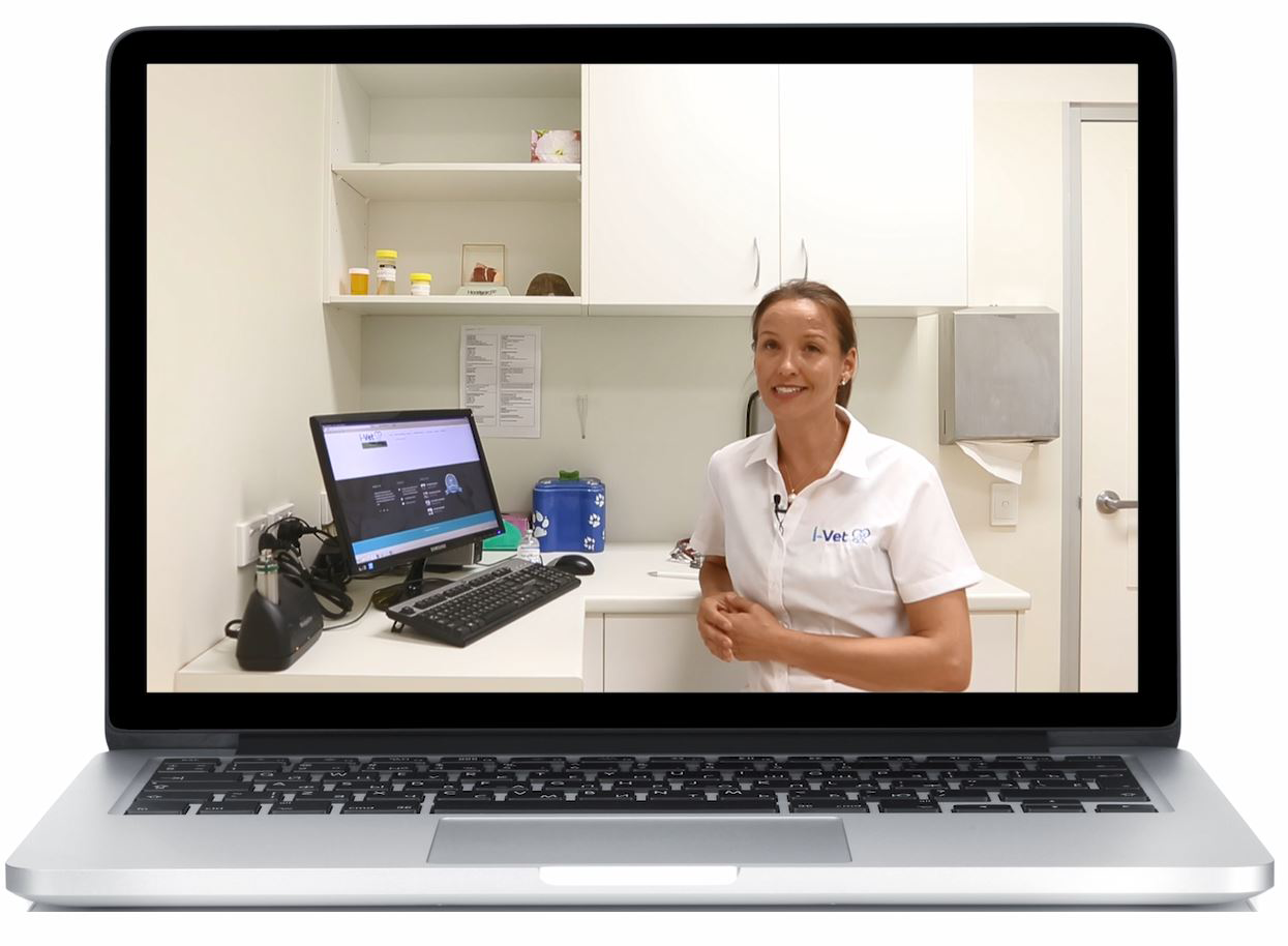 Dr Sue of iVet virtual veterinary clinic