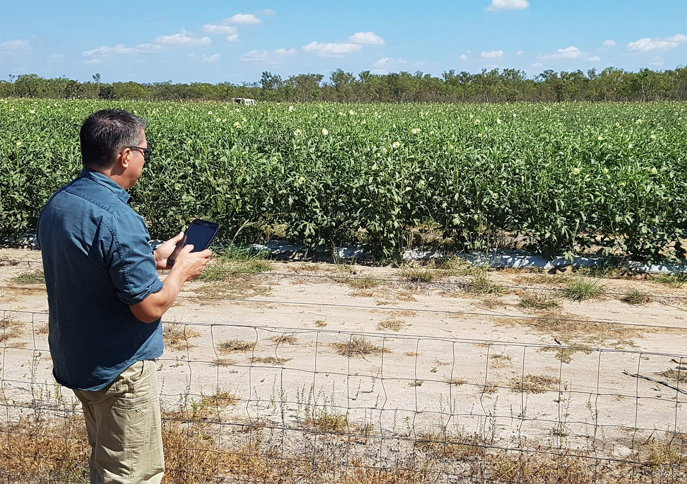 Man using a mobile device standing outside a crop
